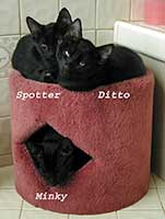 Spotter Ditto & Minky in cathouse